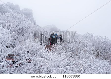 Hiking In The Winter With A Lot Of Fog.winter Mountains Landscape Snow In Korea.