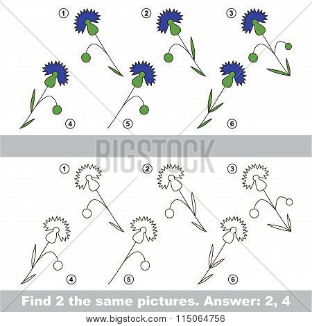 Visual game. Find hidden couple of Cornflowers