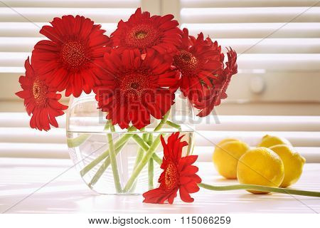 Fresh gerbera daisy in on table in front of window