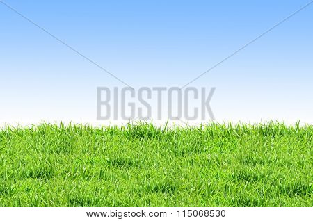 Green Grass And Blue Sky Such As Background