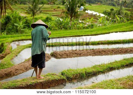 Indonesian farmer prepares a rice paddy