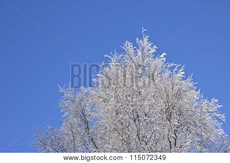 Winter Tree Against Blue Sky