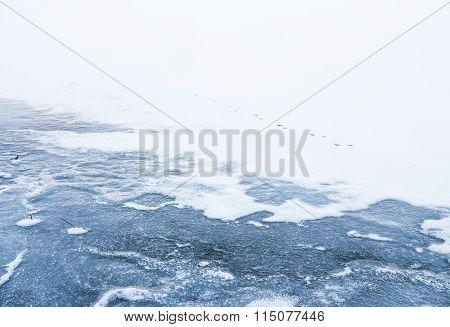 Animal Footprints on Ice