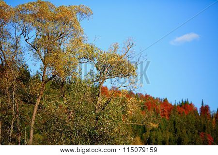 Autumn Landscape With Golden Trees, Blue Sky And White Cloud