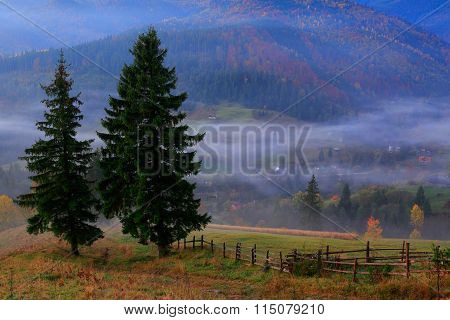 Two Spruce On The Background Of Mountain Landscape