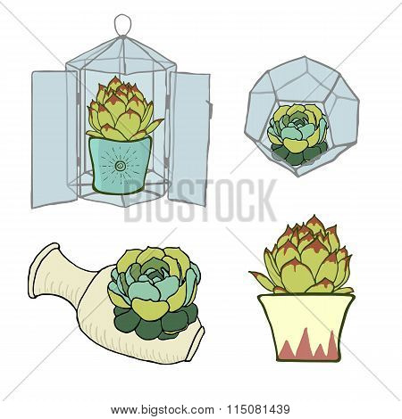 Set of four green succulents - inside