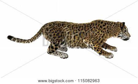 Big Cat Jaguar