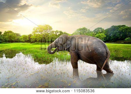Elefant in pond