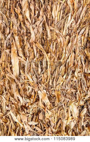Old Leaves Of Corn