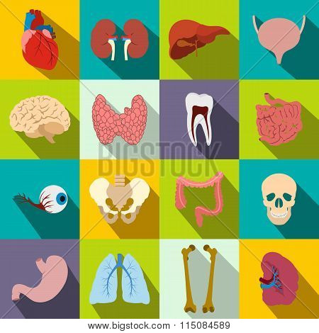 Internal organs flat icons