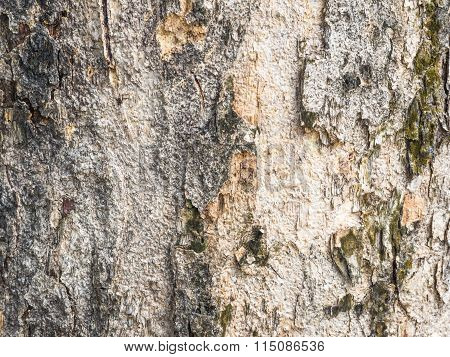 Bark-backgrounds Antique