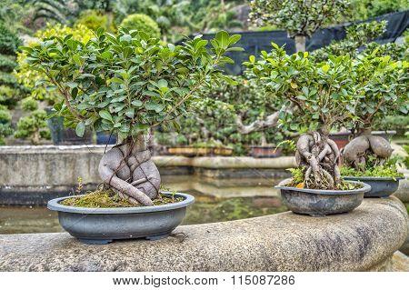 Bonsai In A Garden