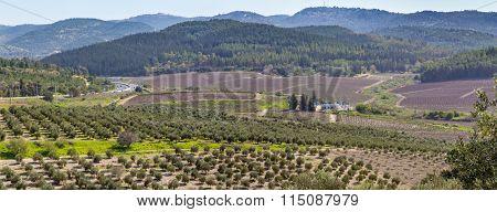 Mediterranean rural landscape, Israel