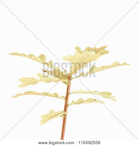 Retro Looking Oak Tree