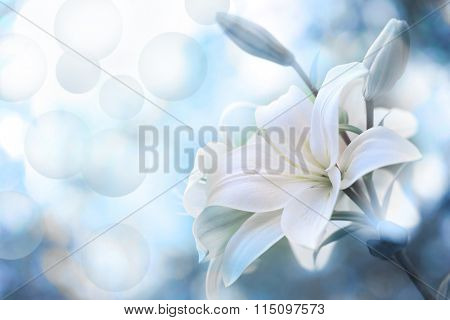 Lily Flowers border design.Spring Flowers
