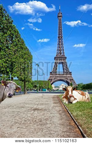 Cows under the Eiffel Tower