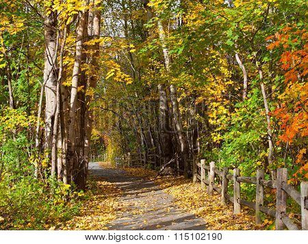 Path in autumn forest.
