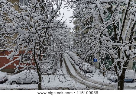 All white under snow, winter scenery at trees covered with heavy snow and street