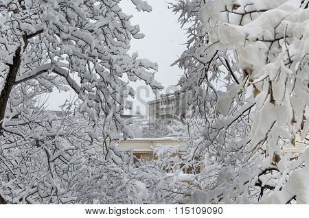 All white under snow, winter landscape at trees covered with heavy snow