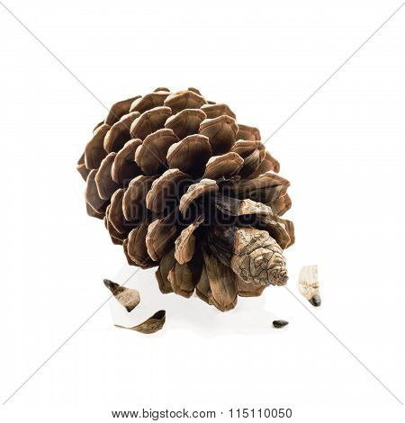 Pine cone and seeds isolated
