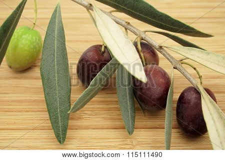 Olive Branch with Black and Green Olives