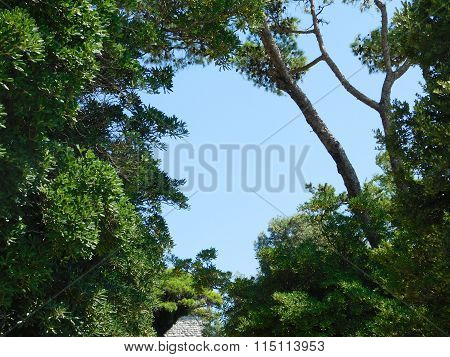 trees in the forest outdoors in the mountains