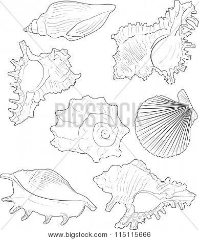 illustration with seven shellfishes sketches isolated on white background