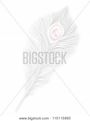 Vector isolated white peacock feather. EPS10