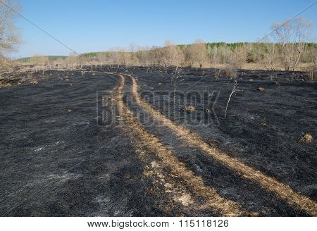 Dirt Road Through A Burnt Field.
