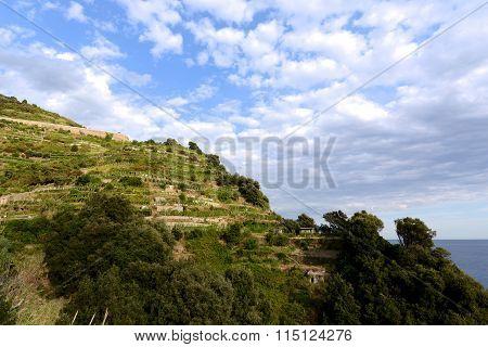 Vineyards On Terraced Hillside