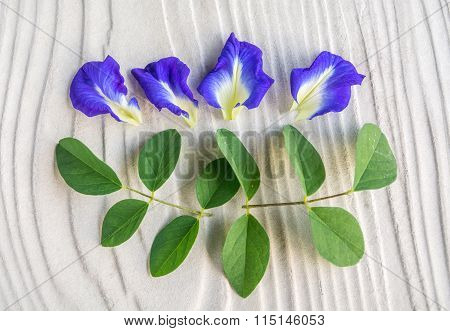 Butterfly Pea Flower Decrease Stress
