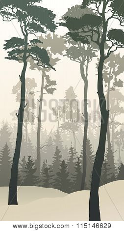 Vertical Illustration Of Winter Forest With Tall Pines.