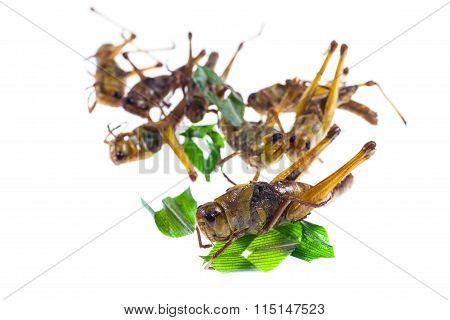 Fry Grasshopper Thai Snack Food On White Background.