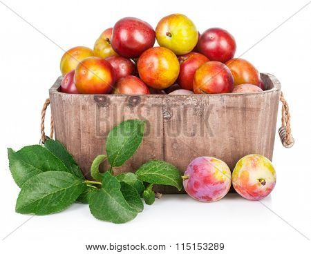 Fresh plums in wooden basket with green leaves. Isolated on white background