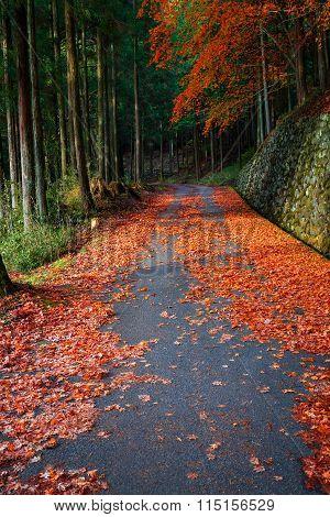 The Road to Taiyuinbyo Shrine and Futarasan-jinja Shrine in Nikko, Tochigi, Japan