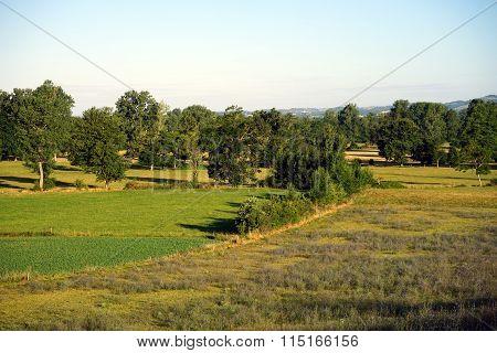 Grass And Lavanda