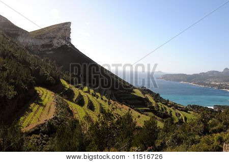 Cliff and vineyards