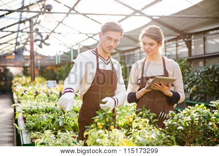 Serious male and female gardeners in brown aprons discussing plants and flowers and using tablet in orangery