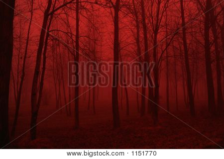 The Deep Red Woods