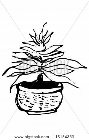 Vector Sketch Of Indoor Flower In A Pot