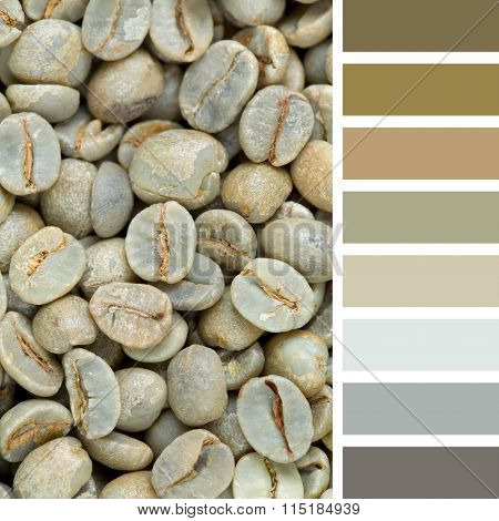 A background of raw green coffee beans. In a colour palette with complimentary colour swatches.