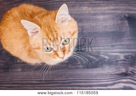 Cat Sitting On The Wooden Floor