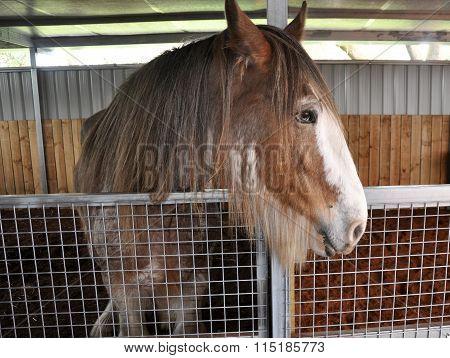 Horse in Profile