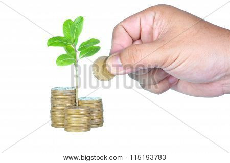 Business, investment or education saving concept - Hand putting coins to add to the growing investme
