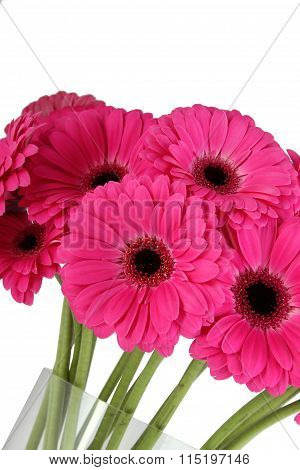 Bouquet of crimson gerberas