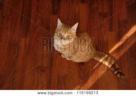 Ginger cat sitting on wooden background