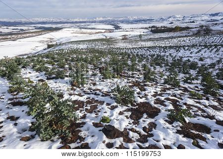 Forestry Trees Valley Mountains Snow