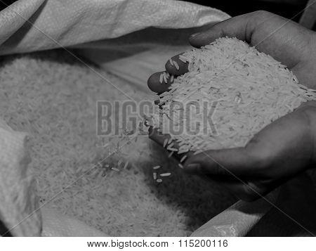 Hand Hold White Rice