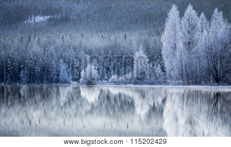 Forest Reflected In Frozen Lake