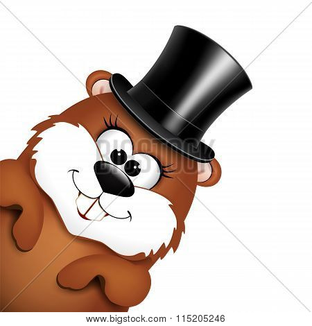 Funny marmot in hat on a white background